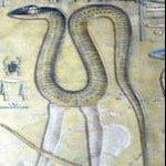 EgyptianSnakeLegs